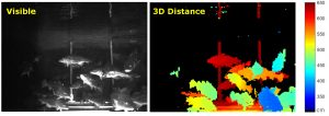Bild 1: 3D reconstruction and intensity image of Atlantic cod swimming in a tank during system tests at DTU Aqua, Dennmark. (Bild: Odos Imaging Limited)
