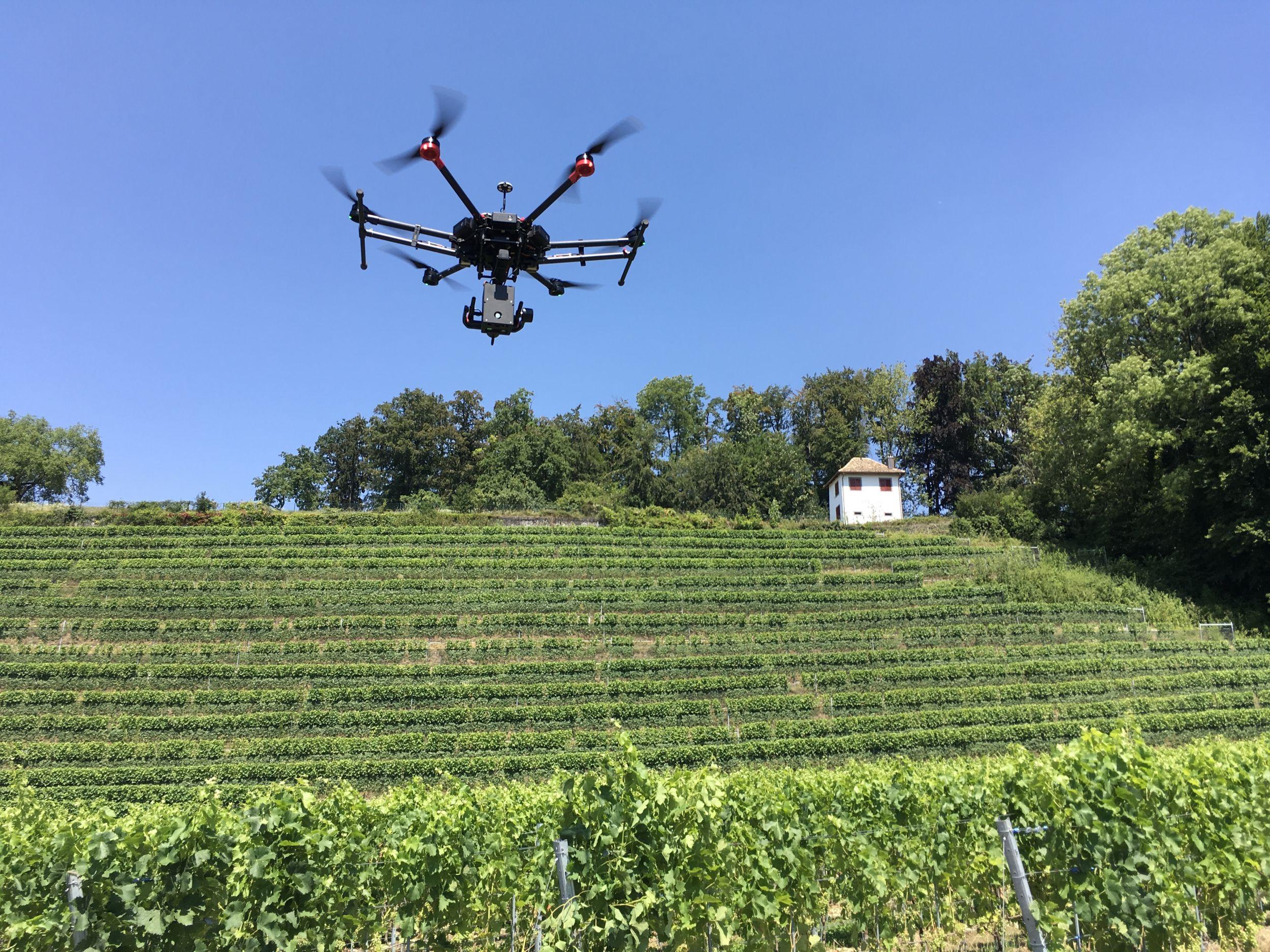Drohnen – Die Helfer der Winzer