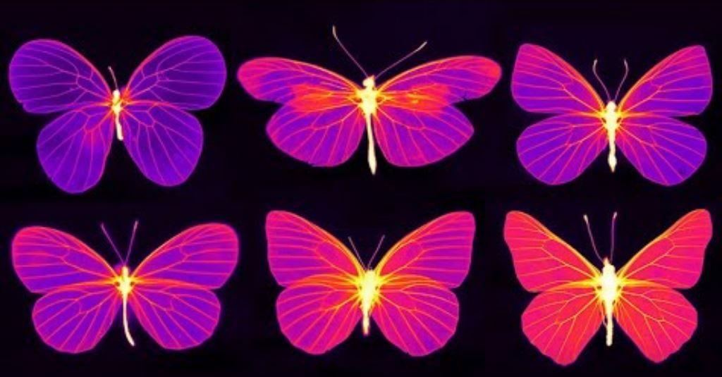 Video: Schmetterlinge & Thermografie