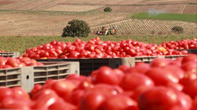 Bild 1   Intelligente Lösungen von ABB sorgen für eine Effizienzsteigerung bei der Tomatenverarbeitung in der Produktionsstätte des Unternehmens Casar auf Sardinien.