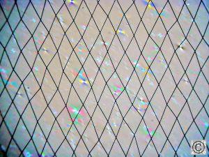 Ungleichförmiges Elektrodengitter, um Moire-Effekte mit gleichmäßiger Pixelstruktur zu verhindern, sowie erkennbare optische Artefakte eines Touch-Aufbaus für polarisiertes Licht (Bilder: Wammes & Partner GmbH)